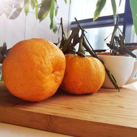 花果鲜 湖北椪柑丑柑橘5斤装 当季丑桔子新鲜水果